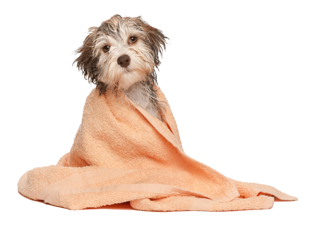 TopDogs4u.co.uk - Dog Grooming Services